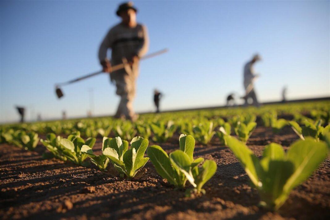 Agricoltura: 20 milioni di euro messi a disposizione da ISMEA
